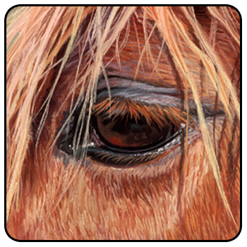 Equine Interactive Psychotherapy